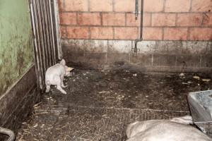 Schweinereport_7